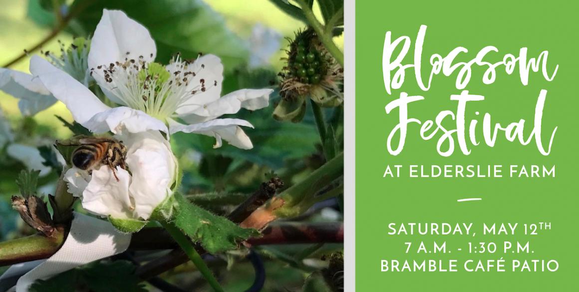 Blossom Festival FB