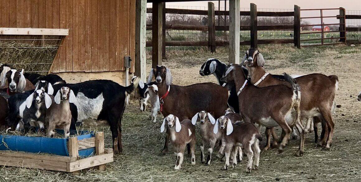 Elderslie Goat Creamery